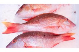 Red snapper per stuk