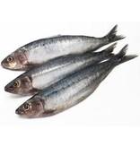 Sardines bestellen