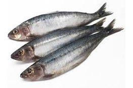 Sardines bretons 1000gr.