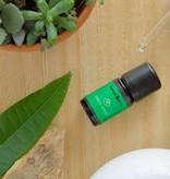 Forest Breeze - huile essentielle naturelle