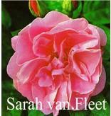 Sarah van Fleet