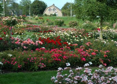Natuurlijke rozenmest