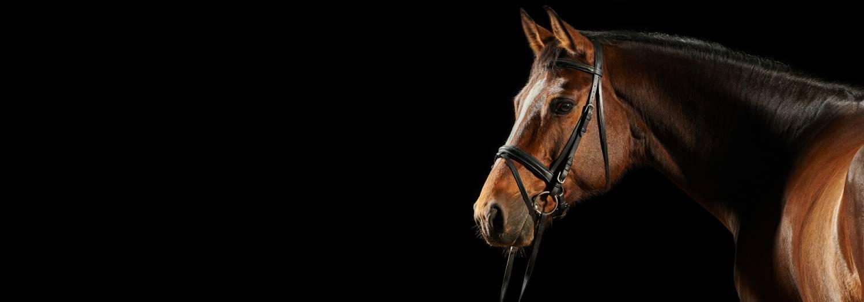 Alles wat je paard nodig heeft...