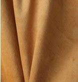 Coton de Velours WV1