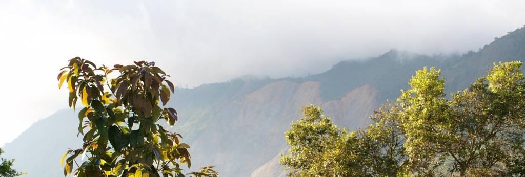 Bio & Regenwald Kaffee aus Afrika & Südamerika