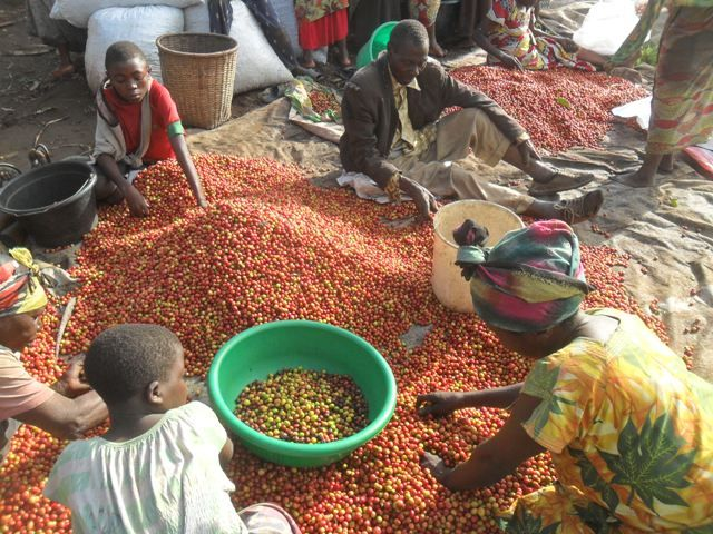DR Kongo Kaffee Fairtrade & Organic