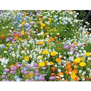 Ten Have Laagbloemen 250gram bloemenmengsel