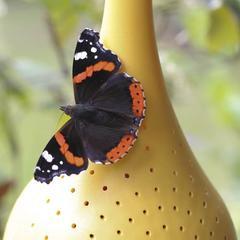 Belightful Belightful Vlinderoase