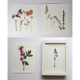 A set of dried and pressed flowers