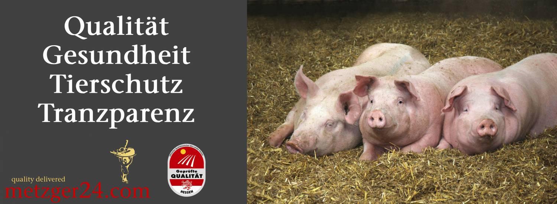 qualität/Gesundheit/Tierschutz/Tranzparenz schwein