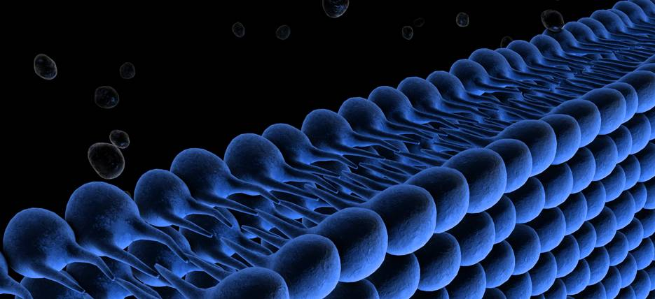 What are the liposomes and why your cells love them?