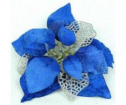 Blauwe Kerstbloem