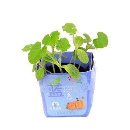Micro Jardinage