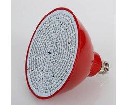 Croissance Ampoule E27 Avec Bleu Et Rouge Lumières