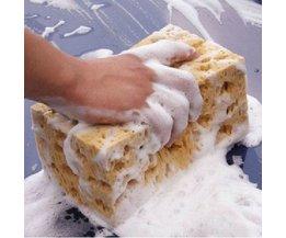 Sponge Solide