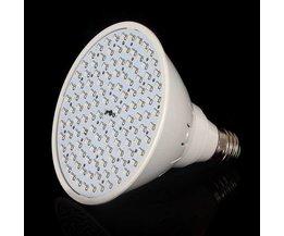 Lampe LED Pour Éclairage À Effet De Serre Avec Le Rouge Et Bleu Clair