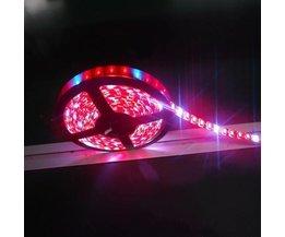 Cultivez Strip Lampe LED