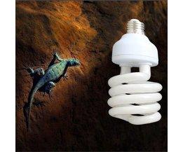 Lampe UVB Pour Un Terrarium