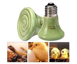 Lampe De Chaleur En Céramique Pour Terrariums (30W / 60W / 90W)