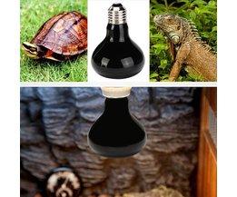 Lampe UV Pour Terrariums (25W, 50W, 75W Ou 100W)