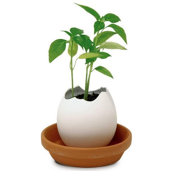 Kaufen Buro Pflanze Ich Myxlshop
