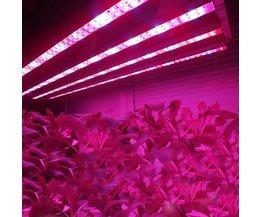 LED Wachsen Helle Anlage