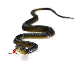 Rubber Snake Toy