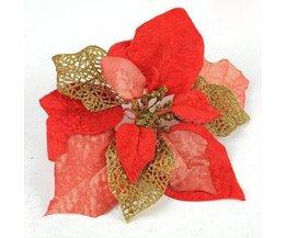 Rote Weihnachtsblume