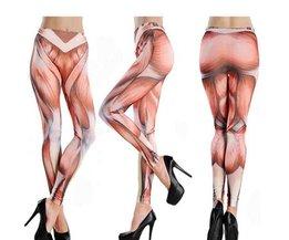 Gamaschen Mit Muskeln