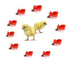 Wasser-Behälter Mit Anschluss Für Chicks 10 Stück