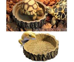Crib Reptiles