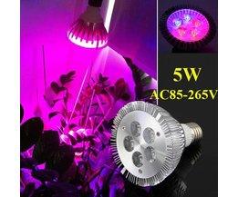 LED Grow Lights (5W, E27)