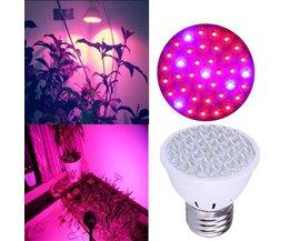 LED Bulb 2 Watt