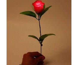 Luminous Rose