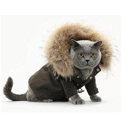 Cat Clothes