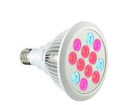 ARILUX E27 Light Bulb For Plants 12W / 24W