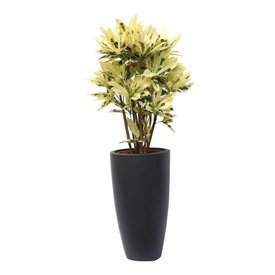 Fleur.nl - Croton struik iceton in pot Elho