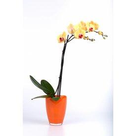 Fleur.nl - Orchidee Yellow in pot glas orange