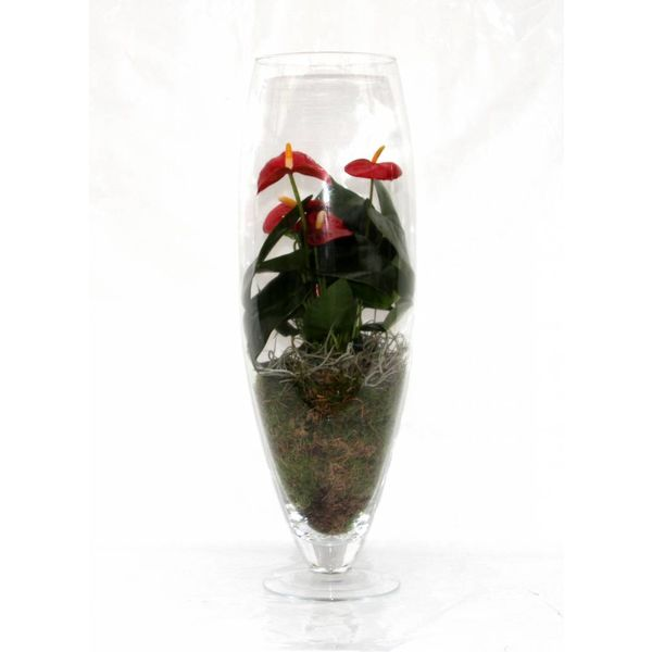 Anthurium Rood in vaas exclusiv (large)