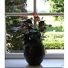 Anthurium Oranje large in keramische pot