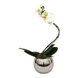 Fleur.nl - Orchidee White Twister in pot Silver