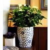 Anthurium Wit Large