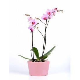 Fleur.nl - Orchidee Pink in pot ovaal