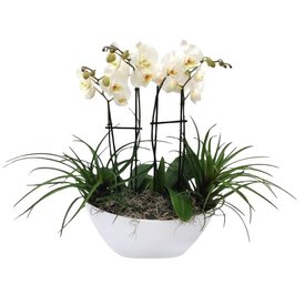 Fleur.nl - Orchidee White in Schaal wit Complete