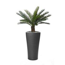 Fleur.nl - Cycas Palm in pot