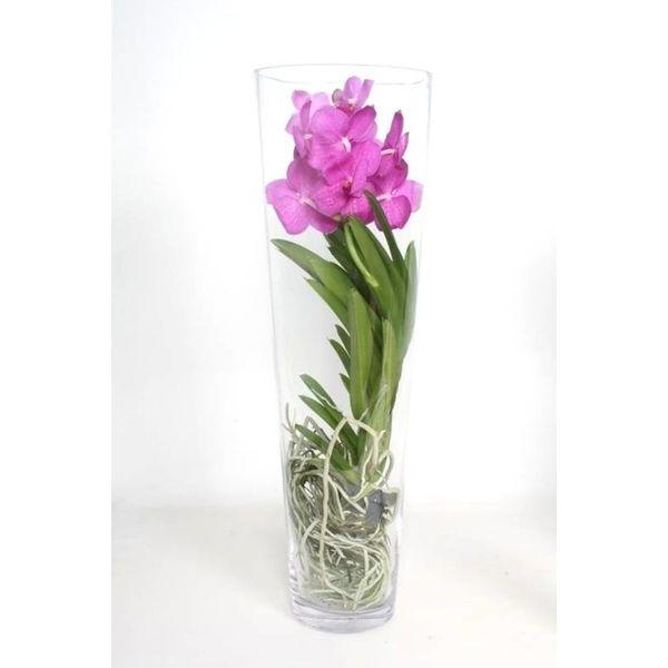 Vanda In Vase Lisann Pink Eenvoudig En Snel Online Bestellen Fleur Nl