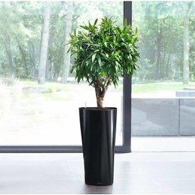 Grote plant in sierpot