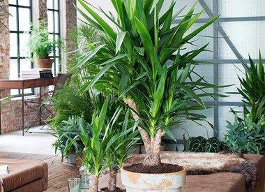Eenvoudig en snel online kamerplanten bestellen for Grote kamerplanten