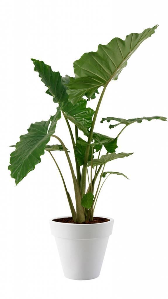 Grote Kamerplanten In Pot Bestellen Makkelijk En Compleet Fleur Nl