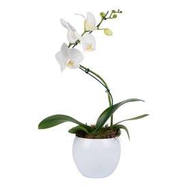 Fleur.nl - Orchidee White Twister in pot White